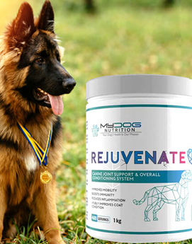 dog supplements for joints